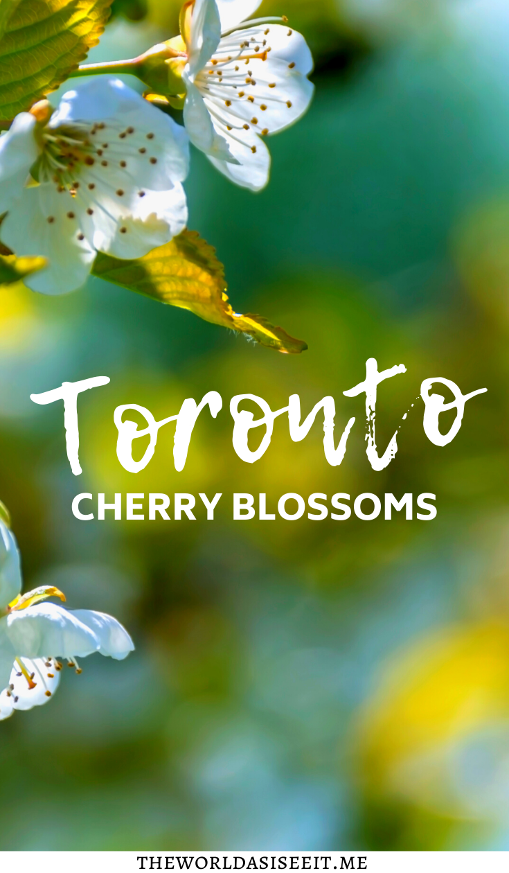 Where To Find Cherry Blossoms In Toronto The World As I See It In 2021 Canadian Vacation Toronto Travel Ontario Travel