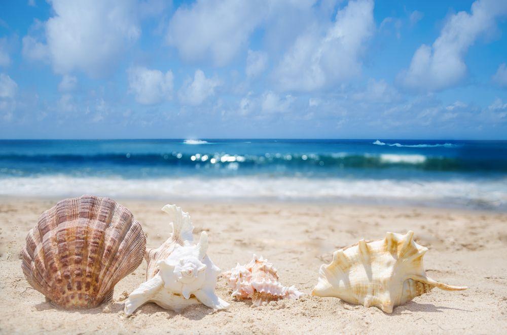 Beautiful Seashells On The Sandy Beach Of Destin Fl