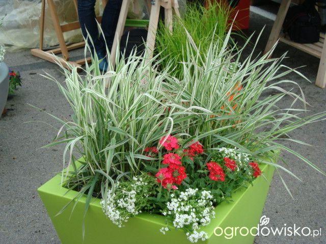 Letnie Skrzynki Balkonowe I Donice Strona 3 Forum Ogrodnicze Ogrodowisko Plants Flowers Basket