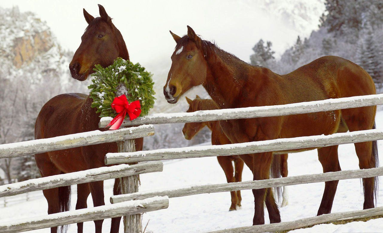 Christmas horses wallpaper for computer wallpapersafari my christmas horses wallpaper for computer wallpapersafari voltagebd Image collections