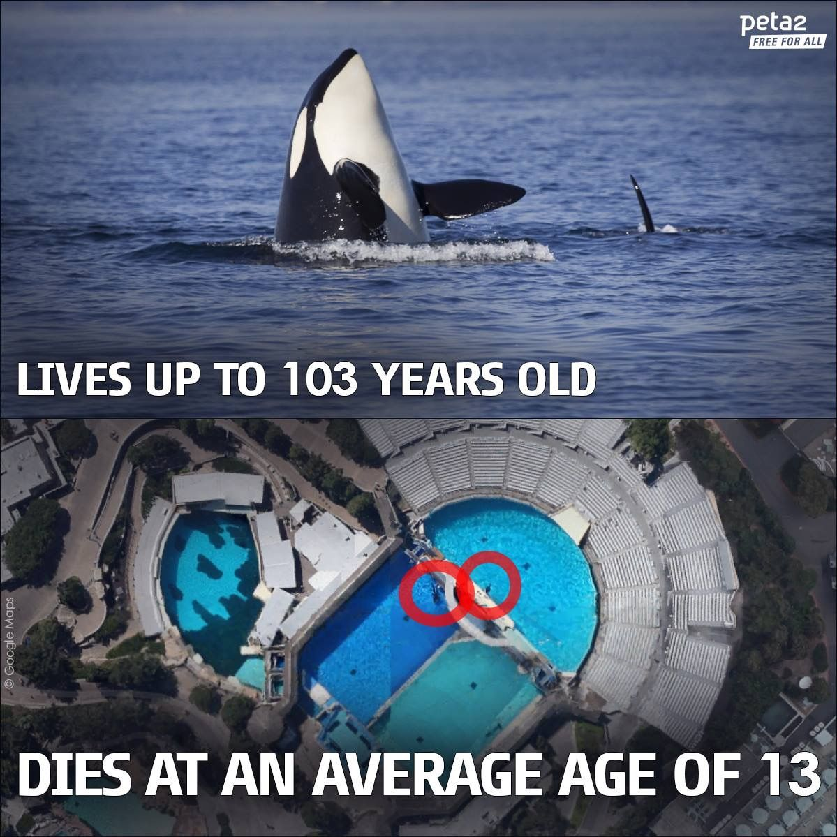 Stop whale abuse<<< I don\'t know if I would say abuse, but yes I ...