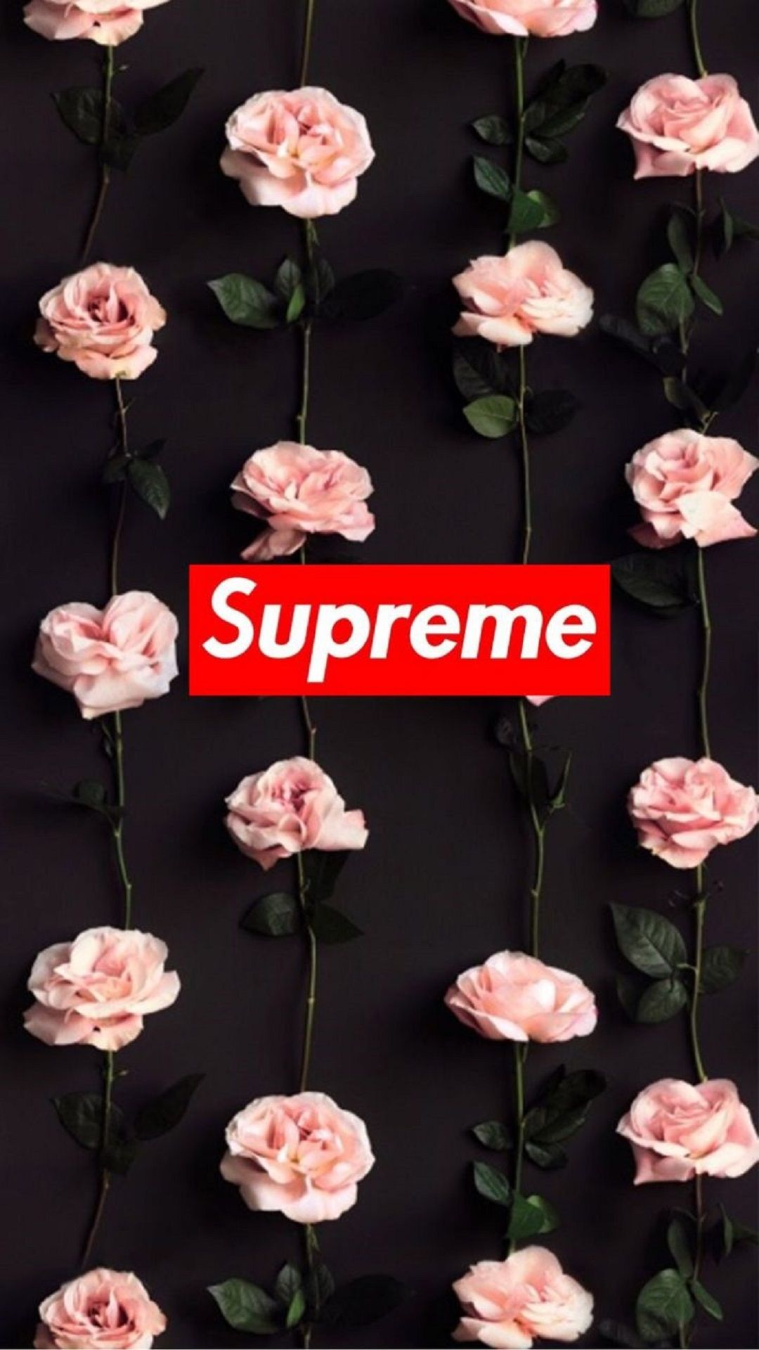 Supreme roses apple iphone 7 plus hd wallpapers available for free download