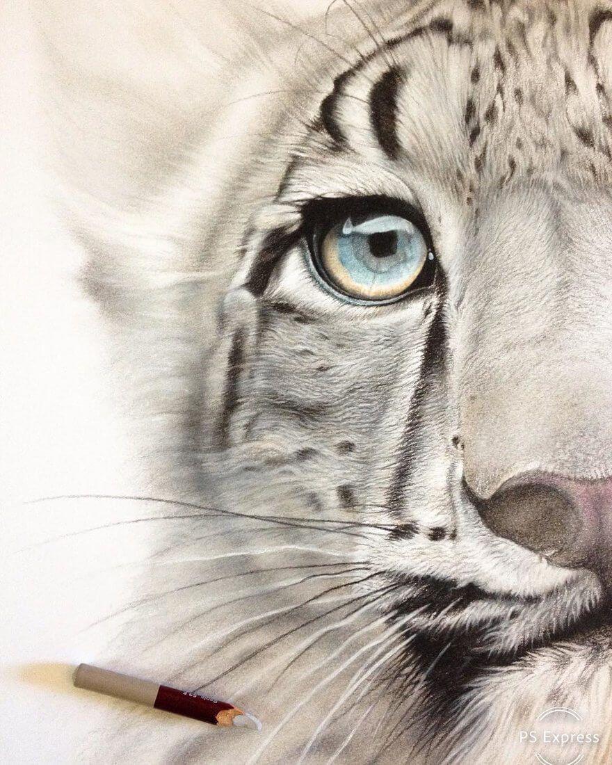 Realistic Wildlife Animal Drawings