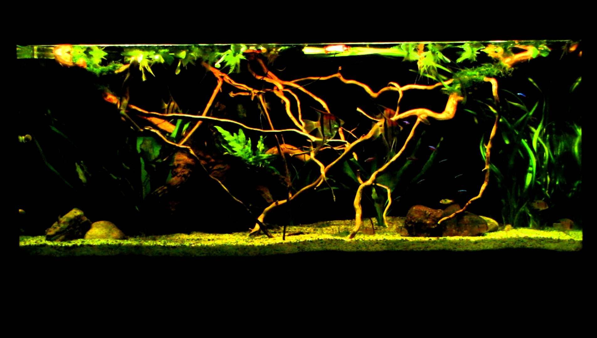 600 litres Amazon biotope aquarium Aquariums