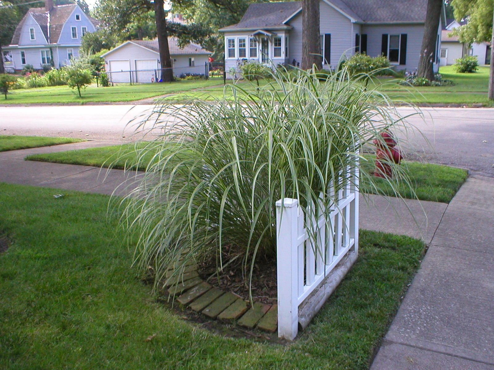 Front yard driveway landscaping ideas  I love grasses This one is just the right size for the corner of