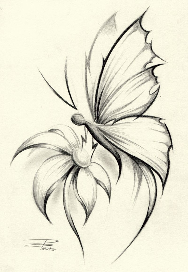 Butterflies And Flowers Drawing Design