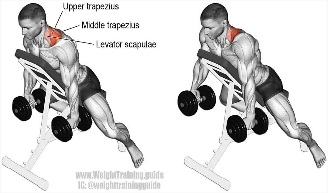 Prone incline dumbbell shrug  An isolation exercise that