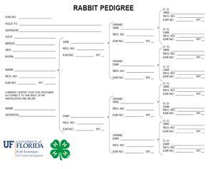 Printable Rabbit Care Chart Google Search Pedigree Chart Pedigree Chart