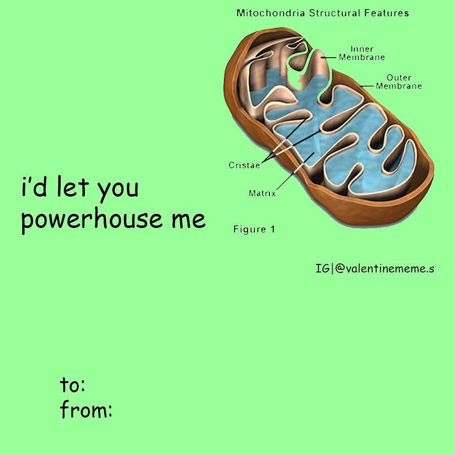 Pin On Valentines Card Memes