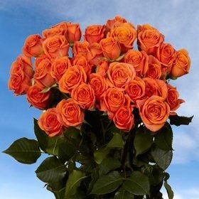 Orange Spray Roses 100