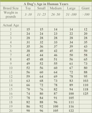 A Very Accurate Dog Age Chart Dog Age Chart Dog Ages Puppies