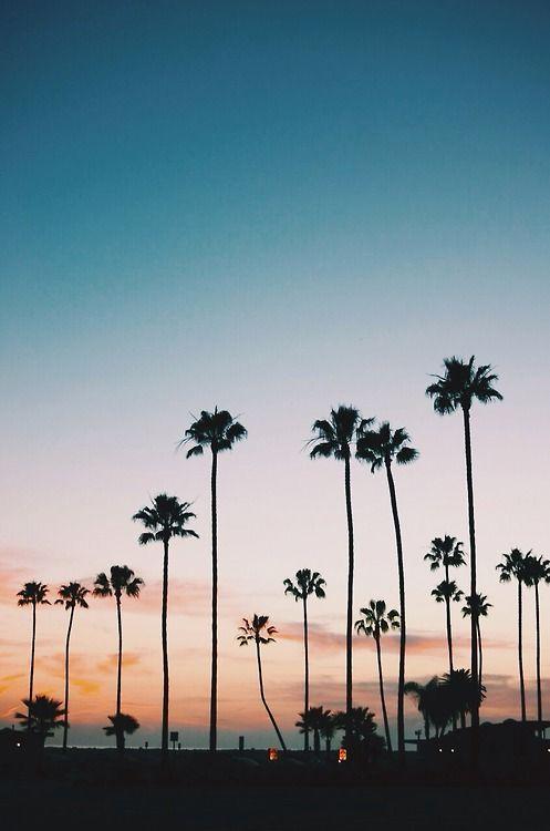 Destinations We Love La California Palm Trees Sunset Travel Honeymoon