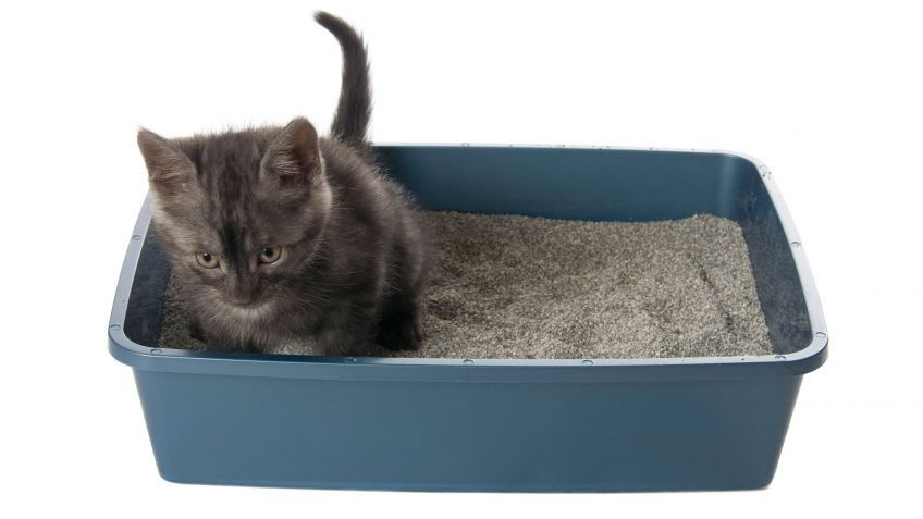 Como Hacer Arena Para Gatos Casera Cajas De Arena Para Gato