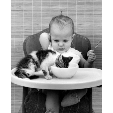 Kitten Drinking Milk From Babys Bowl Canvas Art 24 X 36 Drink Milk Baby Bowls Kittens