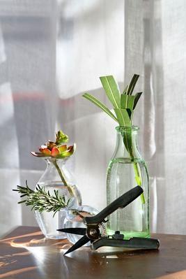 Certaines plantes comme le laurier-rose (au fond) se bouturent dans une verre d'eau.
