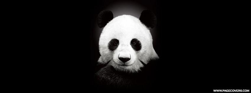 Single Panda Bear Facebook Cover Panda Bear Cute Creatures Panda