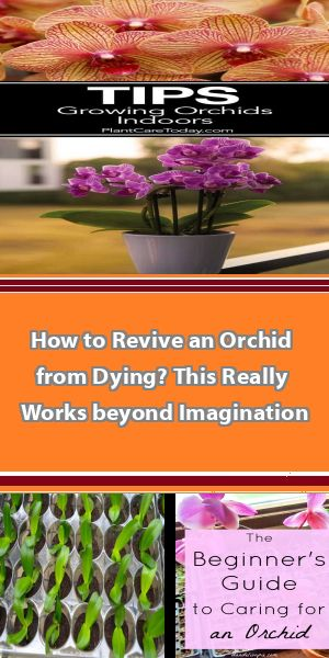 Growing Orchids 101 How to grow orchids for beginners. Easy care orchid types, orchid growing tips, how to keep your orchids happy and much more! Don't be intimidated...give these beautiful and exotic flowers a try.},carousel_data:null,ad_match_reason:0,type:pin #growingorchids
