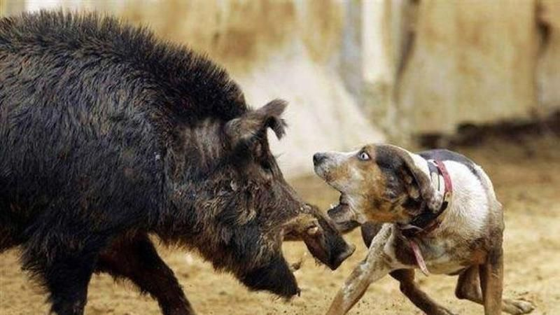 Petition · Florida and 31 other State Governments Outlaw hog dog - creating signers form for petition