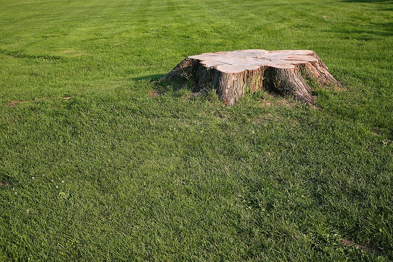 How to remove a tree stump U of IL Extension Planting