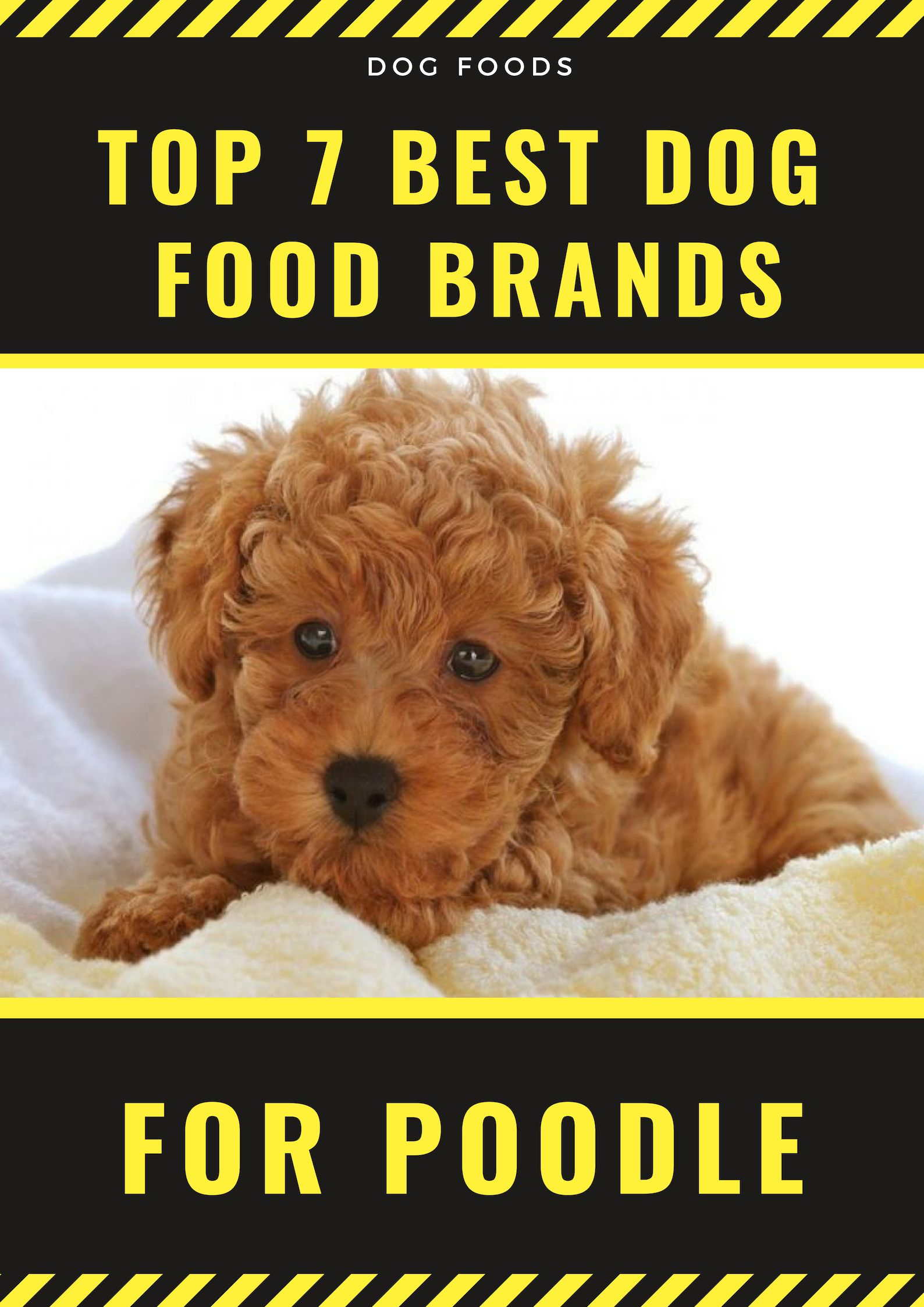 Top 7 Best Dog Food Brands Dog Food Brands Best Dog Food Best