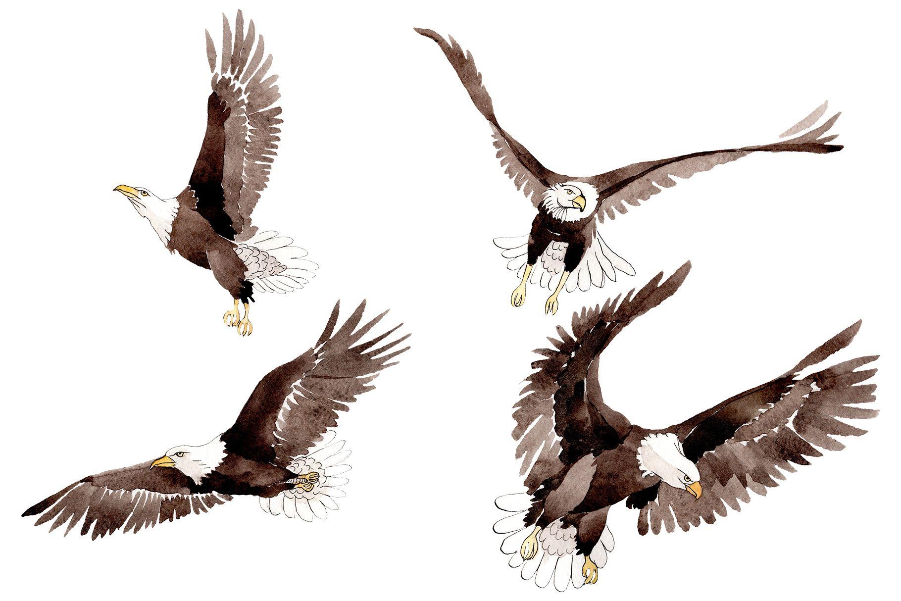 American Bald Eagle Watercolor (Graphic) by MyStocks