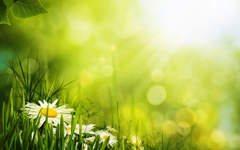 Обои цветы, grass. Цветы foto 18