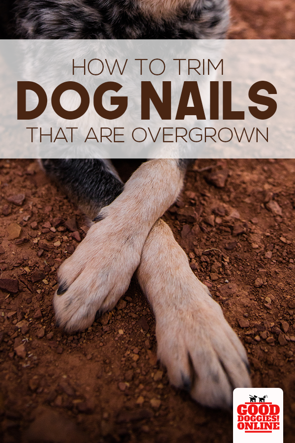 How To Trim Dog Nails That Are Overgrown Complete Guide Good Doggies Online Dog Nails Trimming Dog Nails Dog Wellness