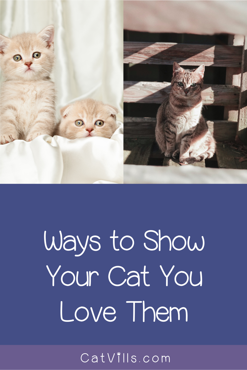9 Ways to Show Your Cat You Love Them CatVills in 2020