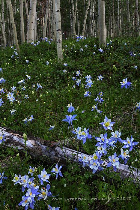 Secret Garden by ~Nzeman #wildflowers