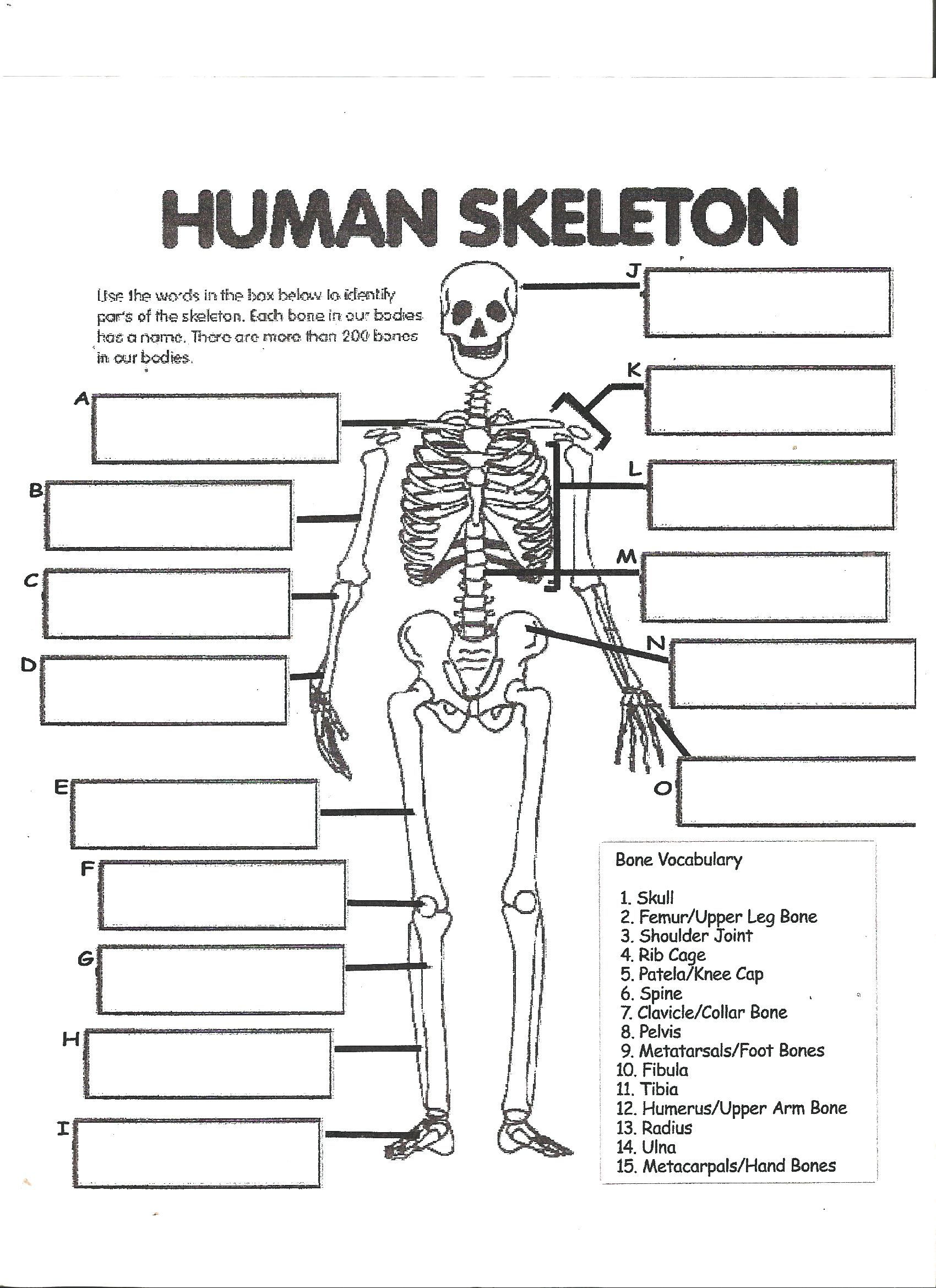 The Whole Skeleton Label Worksheet