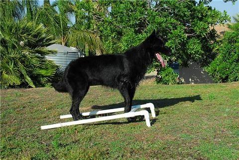 Pvc Positions Box Dog Google Search Dog Training Tools Dog