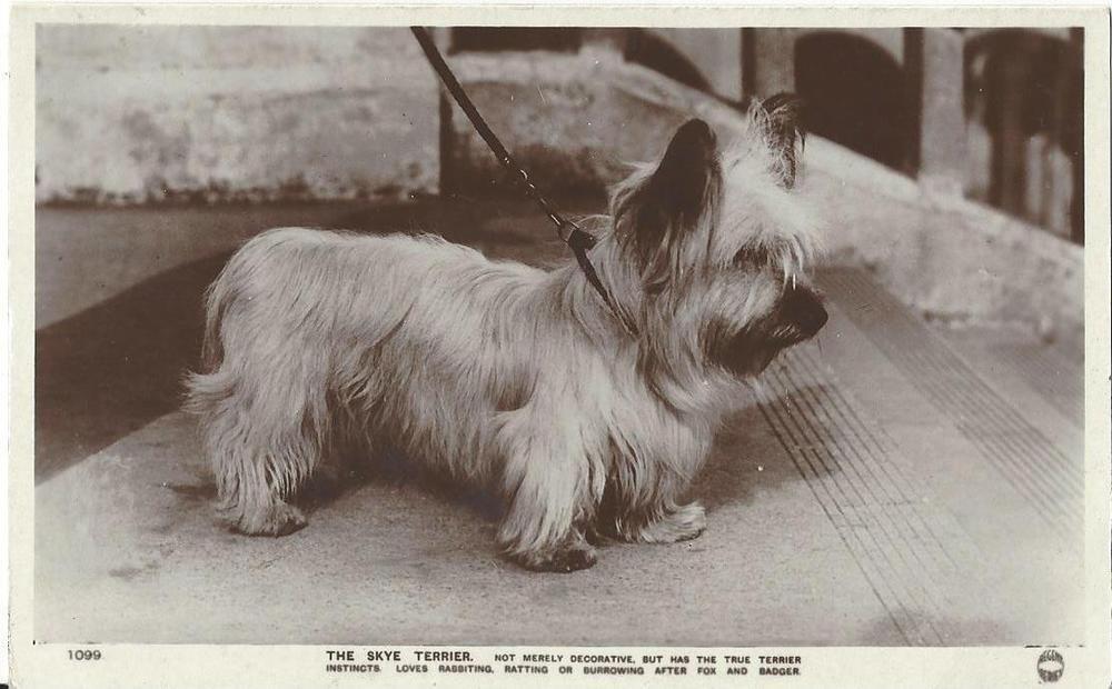 Details About Skye Terrier Dog Vintage Real Photo Postcard