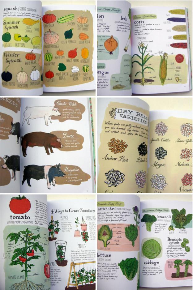 farm anatomy | Illustrations | Pinterest | Anatomy, Farming and Late ...