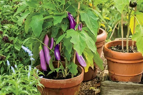 container ve able gardening Fruit and ve able container gardening