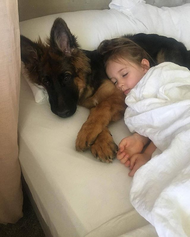 Photo of Isn't this the cutest?! @kingleo_gsd #germanshepherds #germanshepherdmemes #germ…