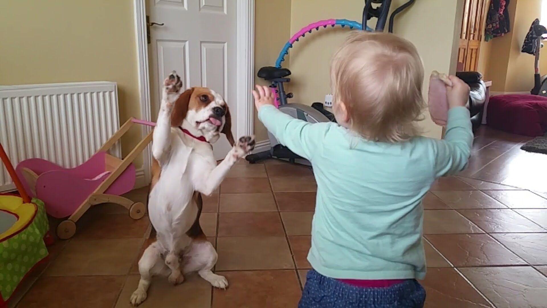 Good Video Beagle Adorable Dog - 9322cf1aac6a5ee70bcdea280d13cd66  You Should Have_52137  .jpg