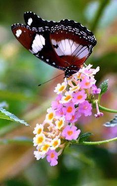 Pin De Ellis Keetlaer En Vlinders Pinterest Mariposas Paisajes