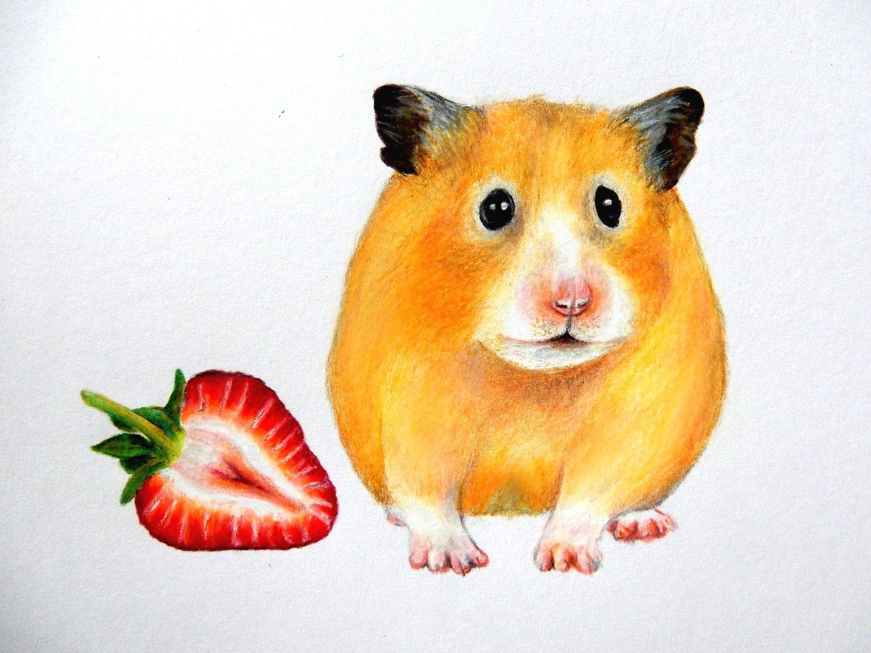Смешные рисунки про хомяков, белкой открытка прикольные