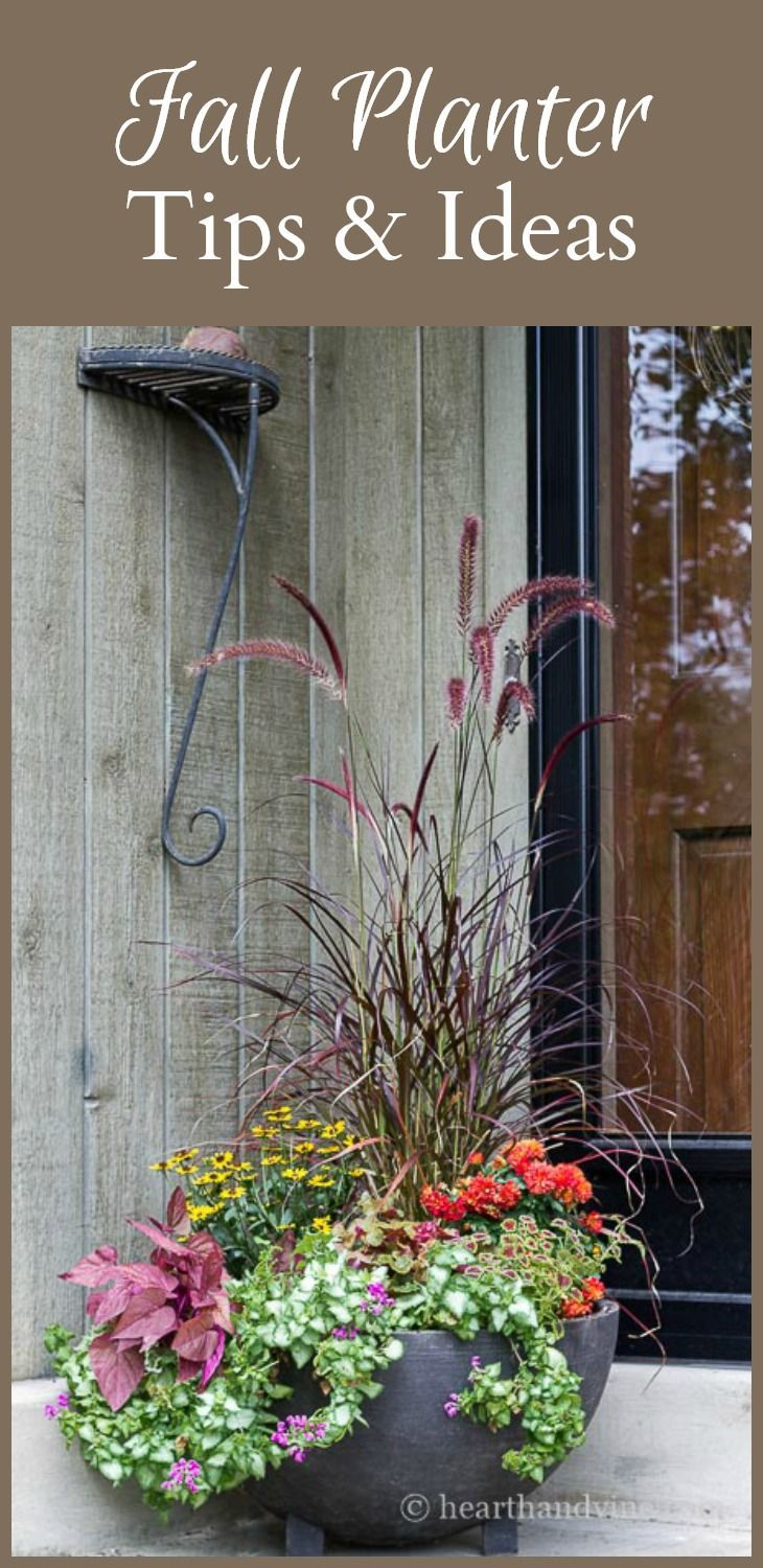 fall planter ideas that will take you into winter winter season