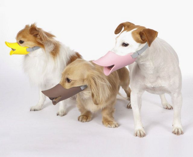 Identity Crisis Duck Billed Dog Muzzles Might Fit Cats Dog