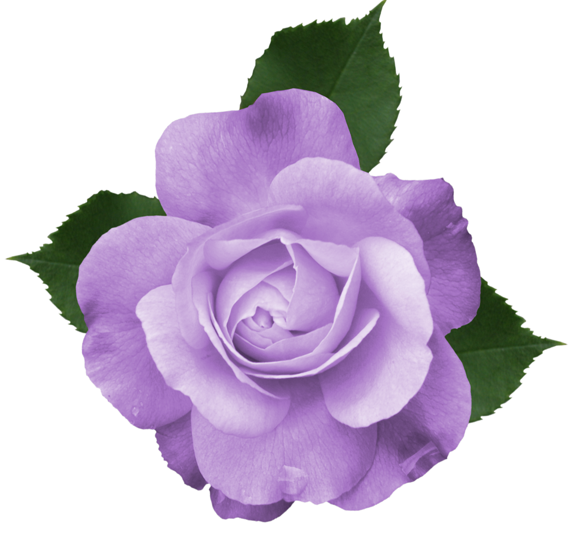 Purple Flower Clipart No Background: Pin By Diane Labadie On Backgrounds