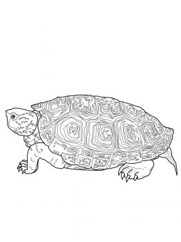Diamondback Terrapin Coloring Page Super Coloring Turtle Coloring Pages Tortoise Drawing Animal Coloring Pages