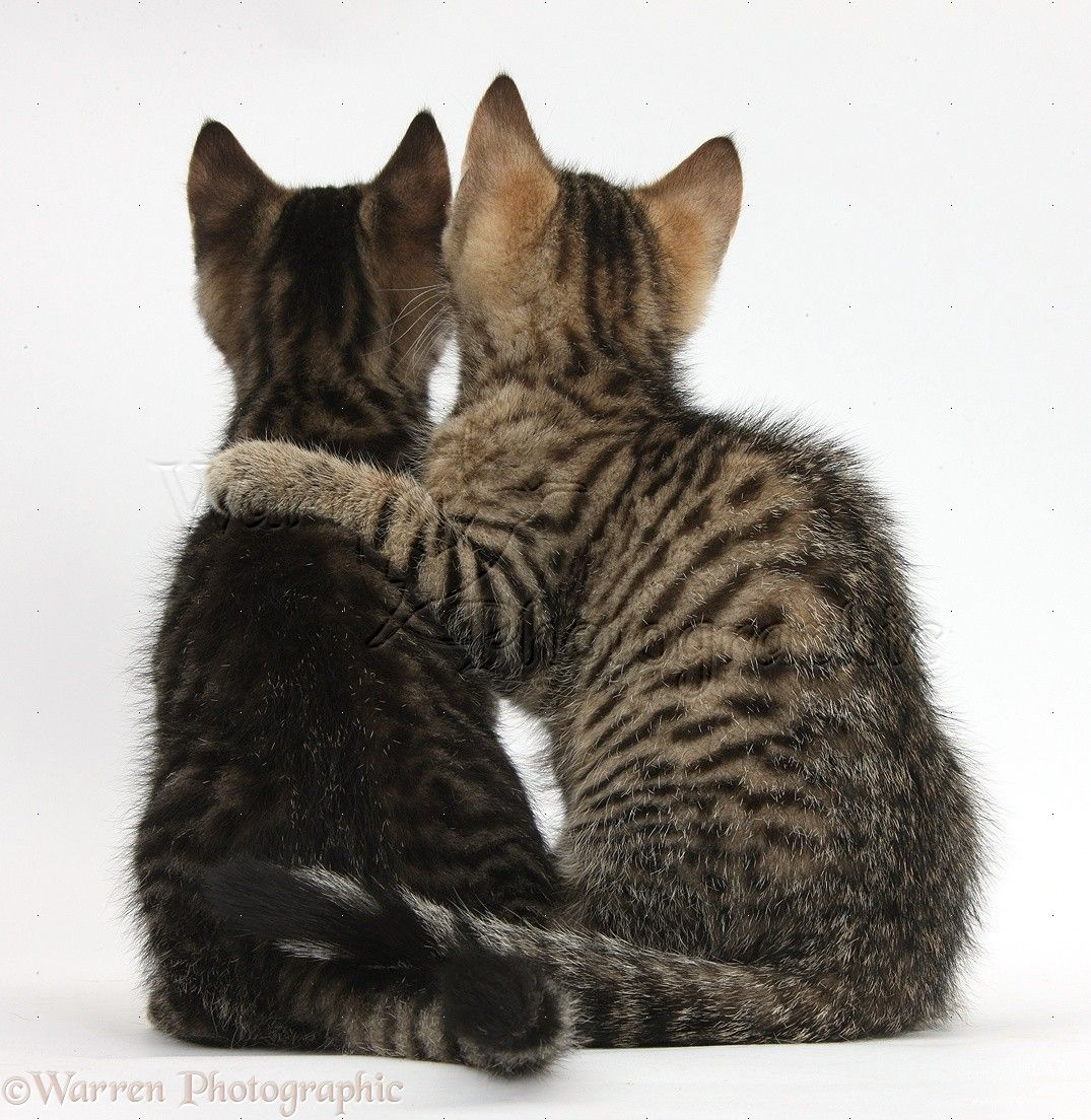 cat scan abdominal