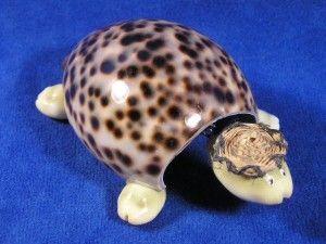 Поделка из ракушек черепаха
