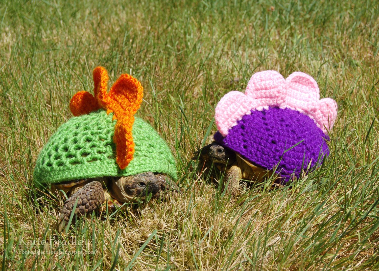 Stegosaurus tortoise cosies ohmz weird knitting and omgness the most adorable tortoise ever pattern is by mossy tortoise etsy bankloansurffo Gallery
