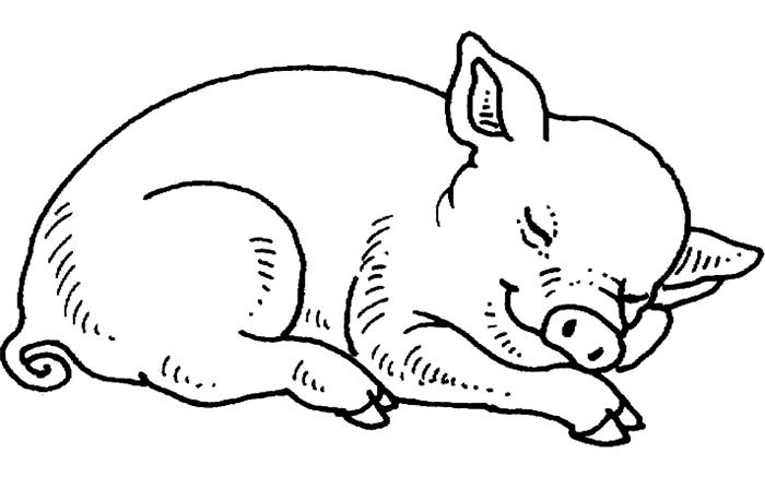 image regarding Pig Template Printable called Pig Template - Animal Templates Totally free High quality Templates