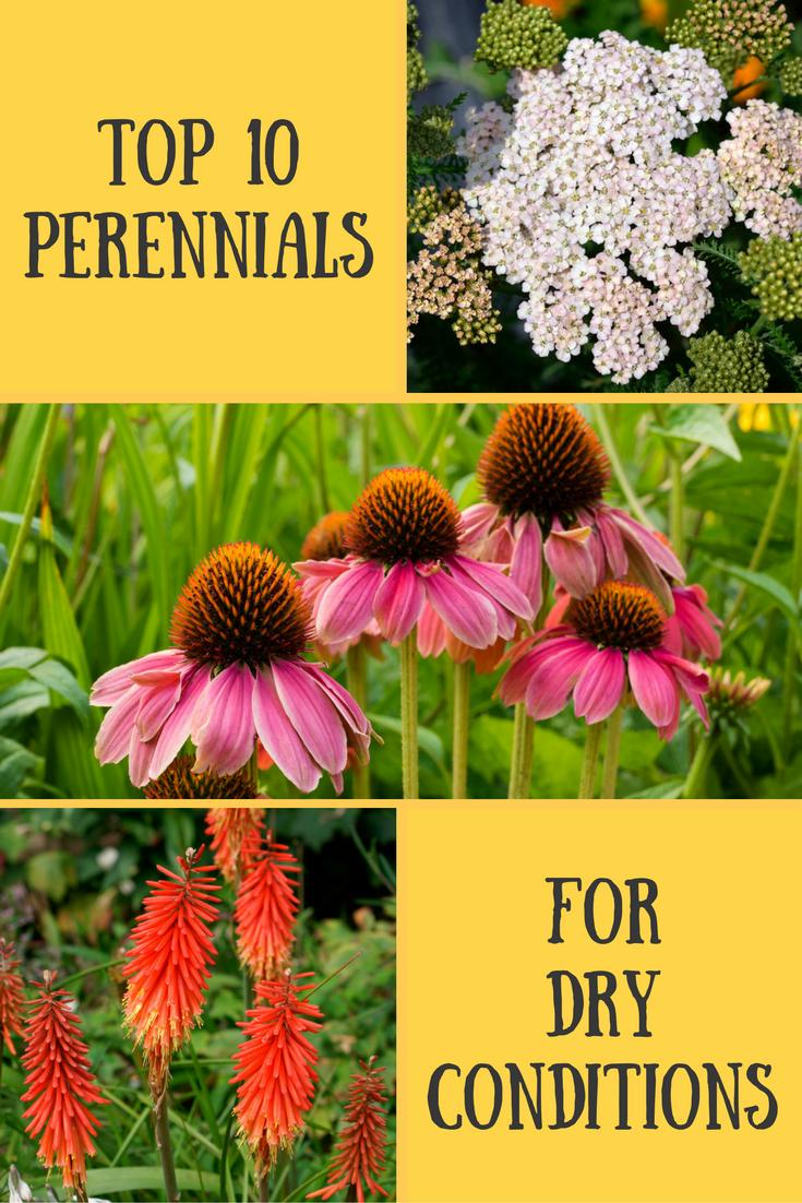 Top 10 Perennials For Arid Gardens Pinterest Perennials Gardens