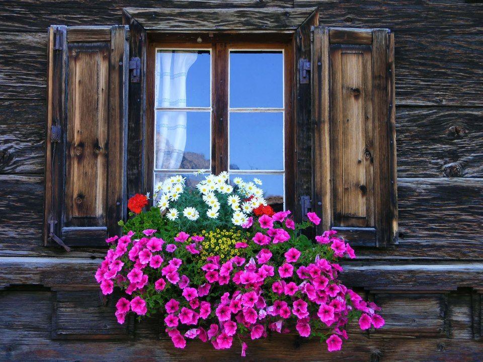 fotos de puertas antiguas con flores - buscar con google