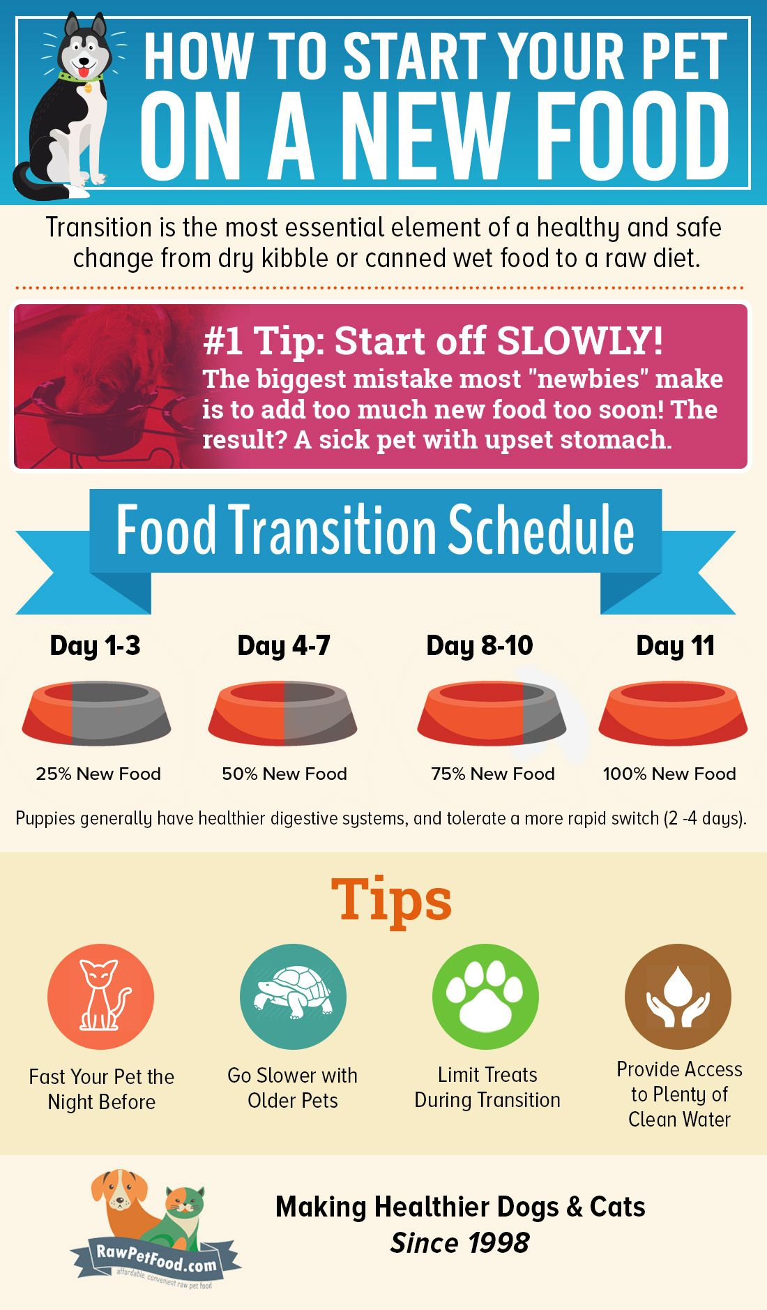 It Is Important That Your Pet Switch Dog Food Gradually From His