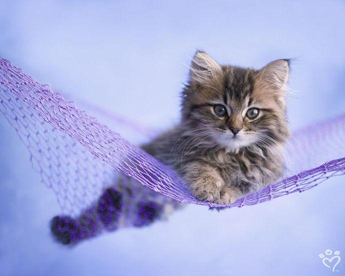 Pin van Conny Scholte op =^..^= Hammock cats Katten